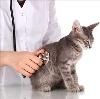 Ветеринарные клиники в Лениногорске